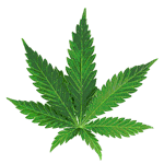 Dispensaries icon